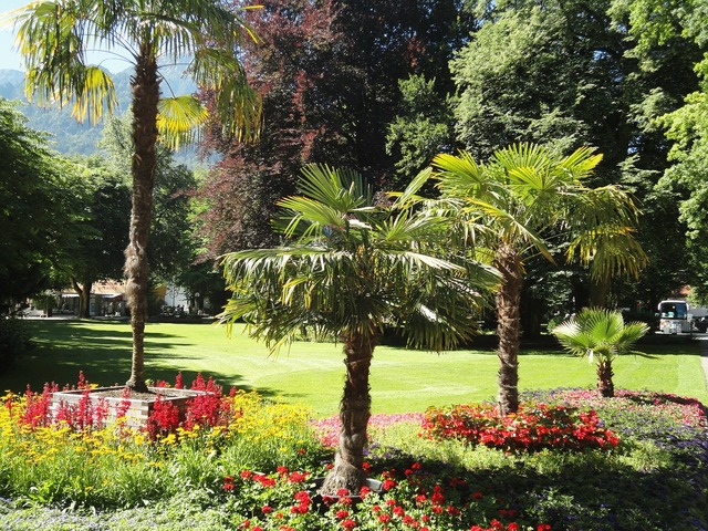 Bad reichenhall kurpark palm trees.