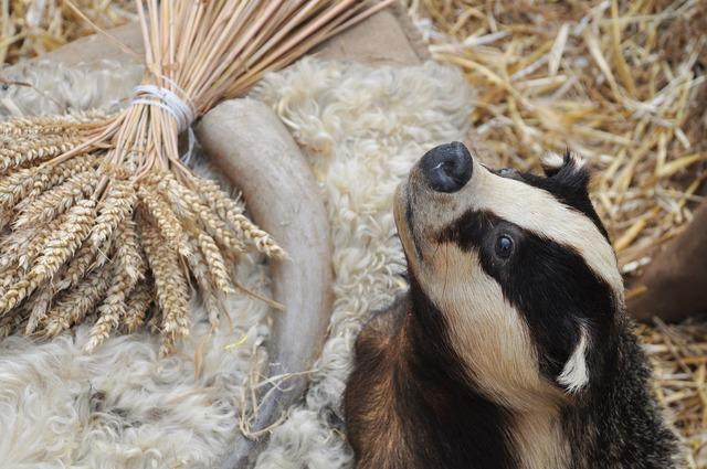 Badger taxidermy animal, animals.