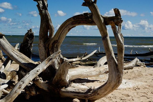 Baltic sea beach driftwood, travel vacation.