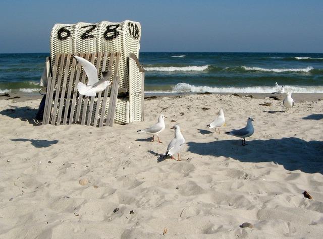 Baltic sea gulls coast, travel vacation.