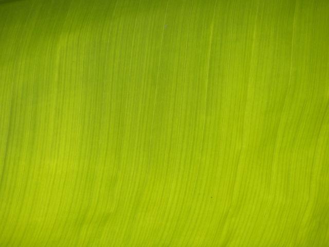 Banana leaf leaf green, nature landscapes.