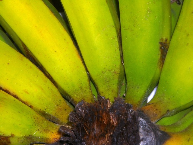 Bananas fruit green, food drink.
