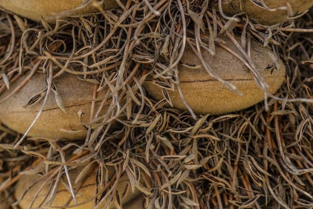 Banksia close-up australia, nature landscapes.