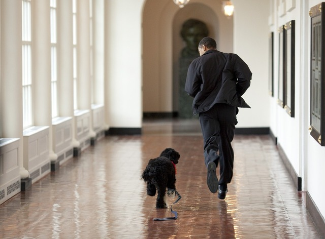 Barack obama and bo play run, people.