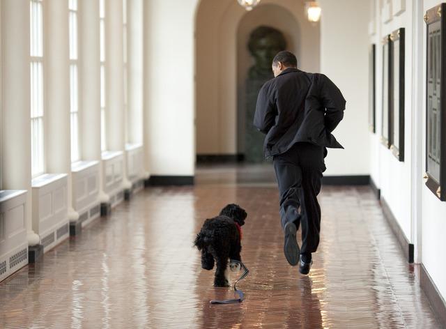 Barack obama and bo play run, people.