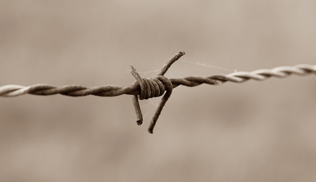 Barbed wire fence barbed wire fence.
