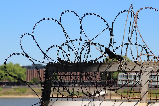 Barbed wire fence freedom.