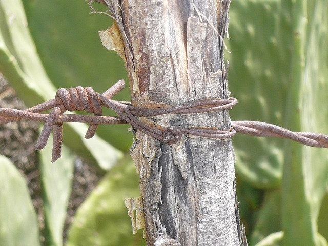 Barbed wire fence limit.