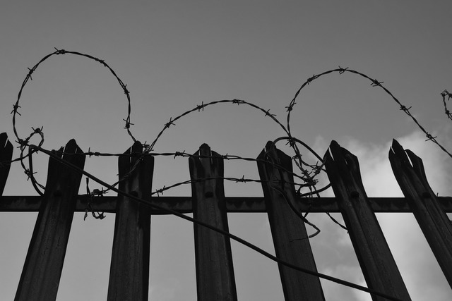 Barbed wire fence secretion.