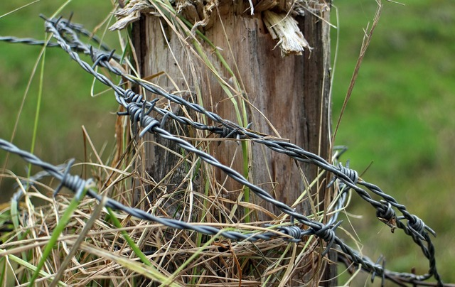 Barbed wire post fence.