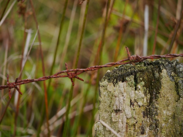 Barbed wire stainless metal.