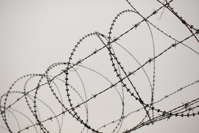 Barbed wire this star pain.