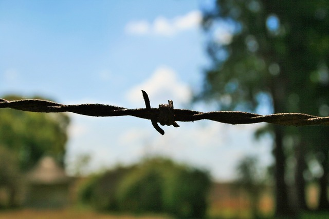 Barbed wire wire barb.