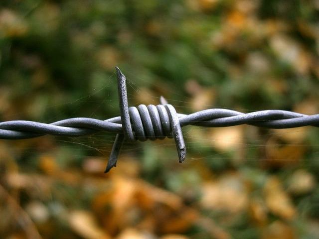 Barbed wire wire cobweb.