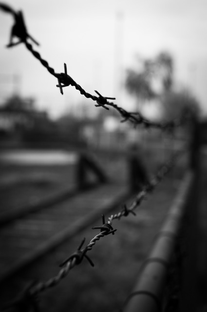 Barbwire barbed wire wire.