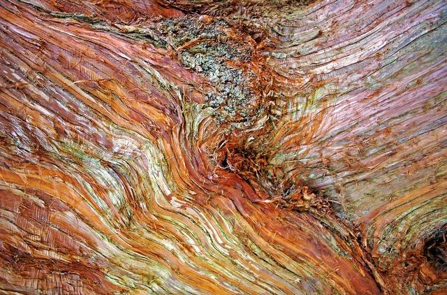 Bark tree nature, nature landscapes.