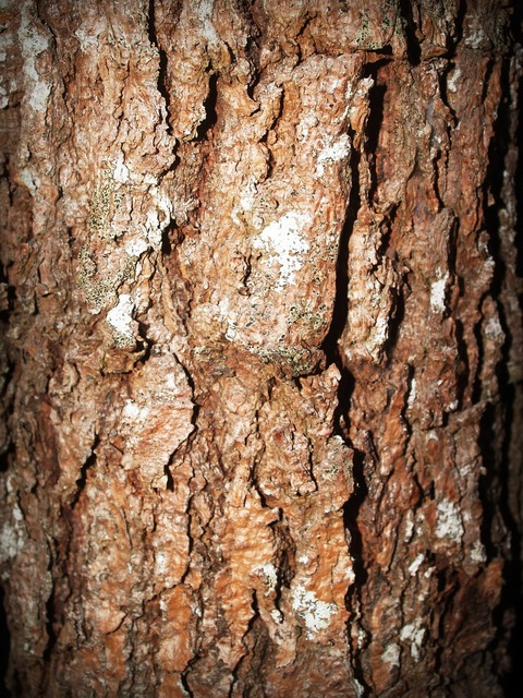 Bark tree wood, backgrounds textures.
