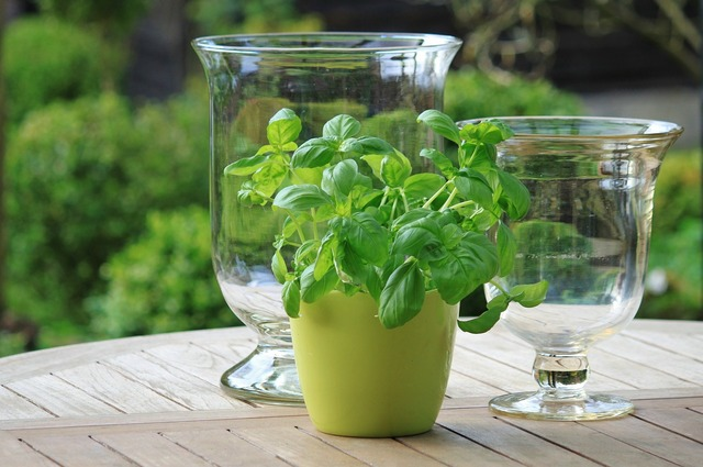 Basil herbs green, food drink.