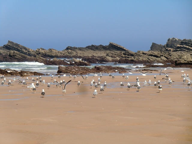 Beach amalia alentejo, travel vacation.
