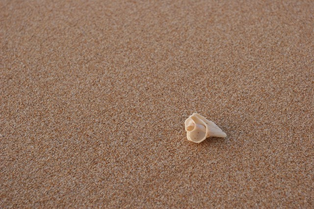 Beach conch sand, travel vacation.