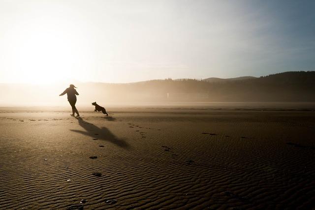 Beach dog chase, travel vacation.