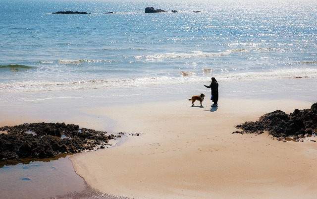 Beach dog marine, travel vacation.