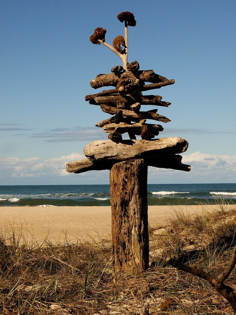Beach driftwood seascape, travel vacation.