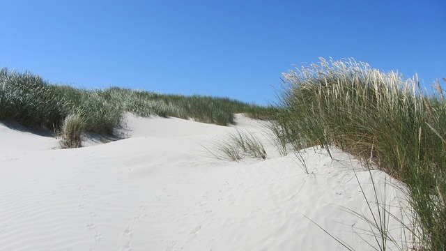 Beach dune north sea, travel vacation.