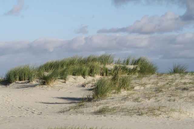 Beach dunes north sea, travel vacation.