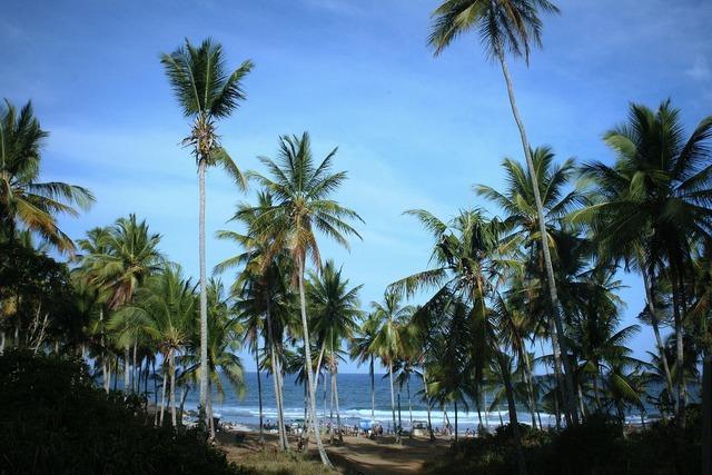 Beach mar coconut trees, travel vacation.