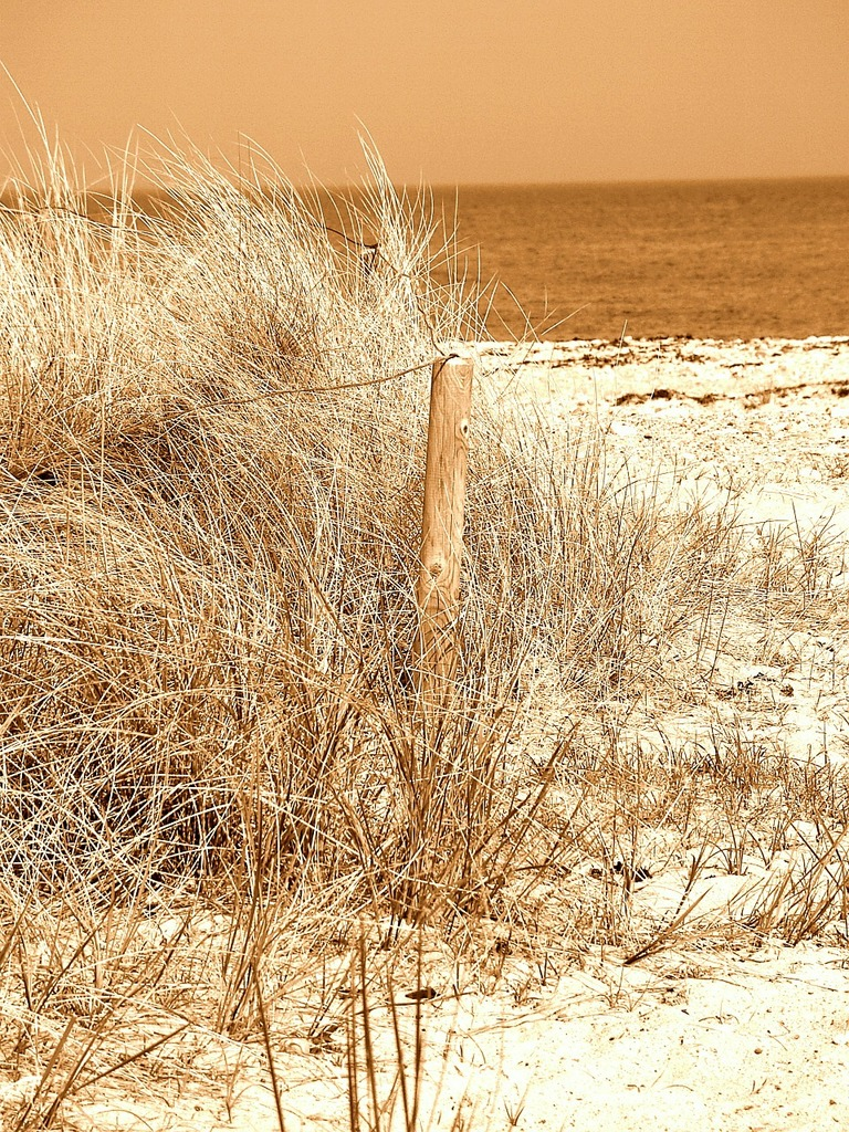 Beach sand north sea, travel vacation.