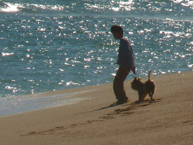 Beach sea child, travel vacation.