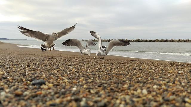Beach sea gull diet, travel vacation.