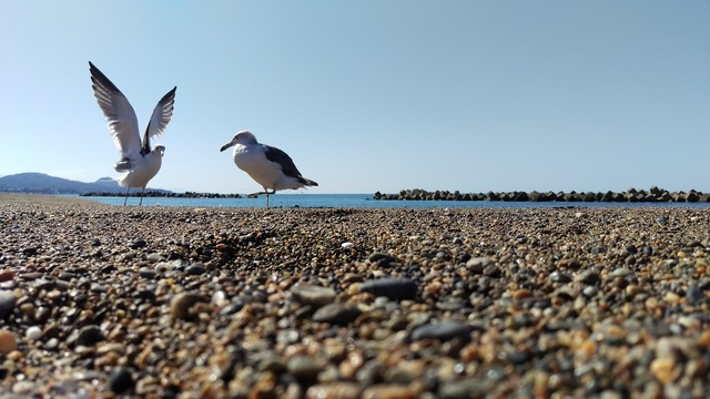 Beach sea gull wild animal, travel vacation.