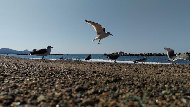 Beach sea gull wild birds, travel vacation.
