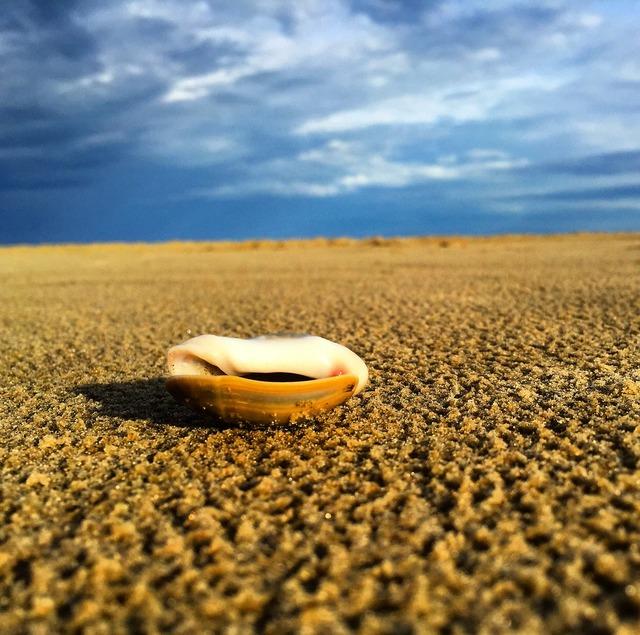 Beach shells brazil, travel vacation.