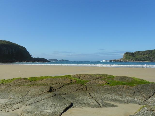 Beach shells mar, travel vacation.