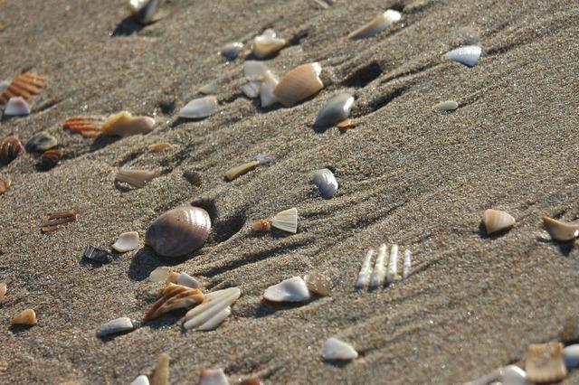 Beach shells sand, travel vacation.