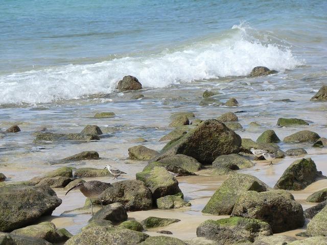 Beach stones sea, travel vacation.