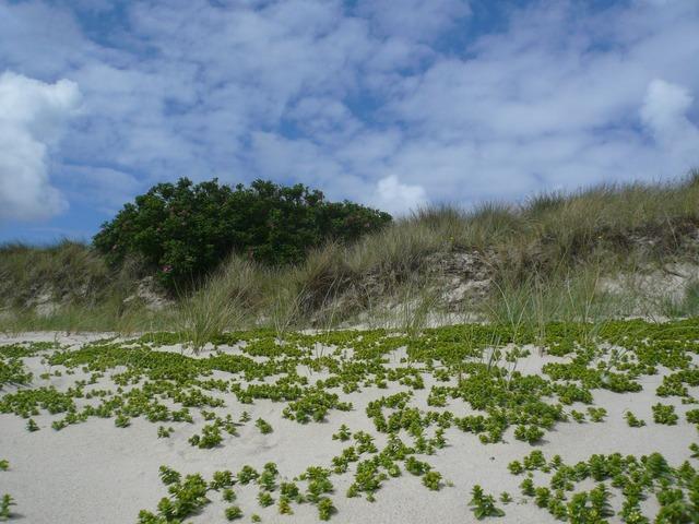 Beach sylt north sea, travel vacation.