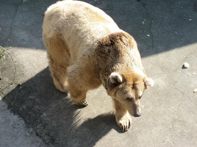 Bear animal wilderness, animals.