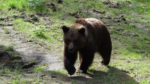 Bear mammals teddy, nature landscapes.