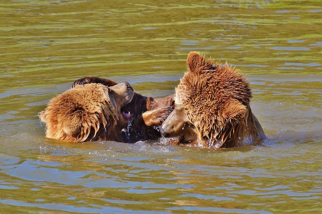 Bear wildpark poing play, nature landscapes.