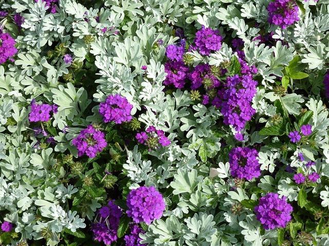 Bed purple garden, nature landscapes.