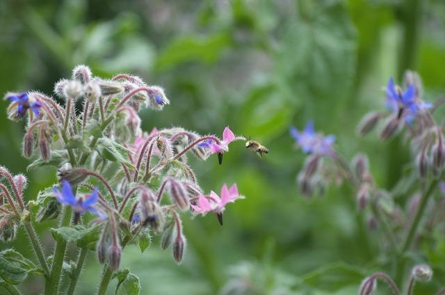 Bee garden summer, animals.