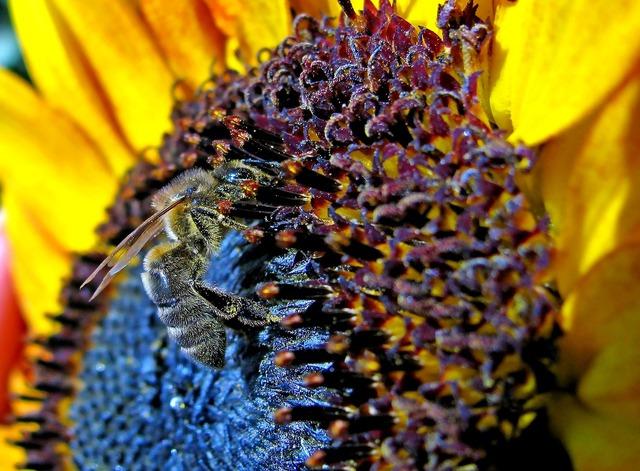Bee sunflower summer, nature landscapes.