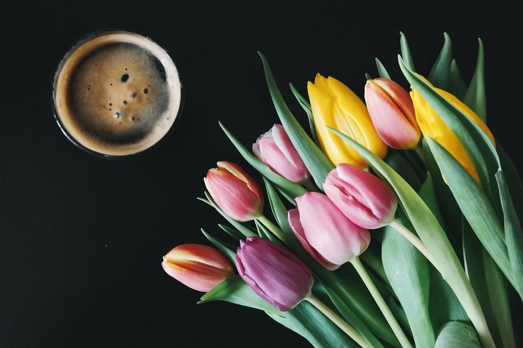 Beer flowers tulips, food drink.