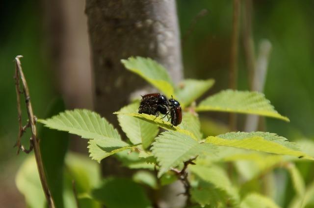 Beetle sex nature, nature landscapes.