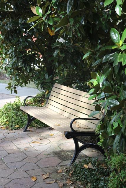 Bench park peaceful.
