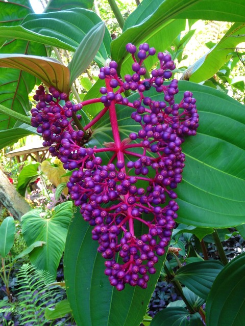 Berries wild purple, nature landscapes.